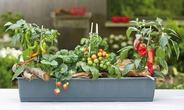 Gärtnerei: Gemüse- & Obstpflanzen, Kräuter